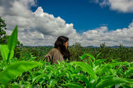 girl posing at green tea garden with bright sky background image is taken at ooty india.
