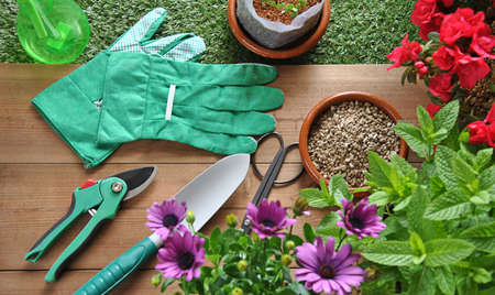 gardening tools: garden tools on grass and wood table with various types of plants