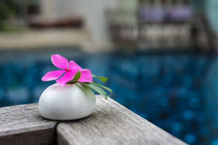 Beautiful pink flower on stone spa concept Stock Photo - 13616972
