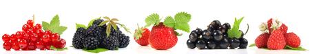 Various Berries - Panorama 免版税图像
