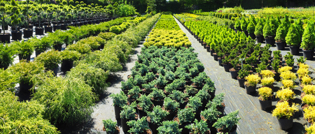 Professional Plant Nursery in Summertime