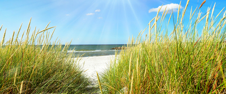 Baltic Sea Beach with Sea Grass - Panorama