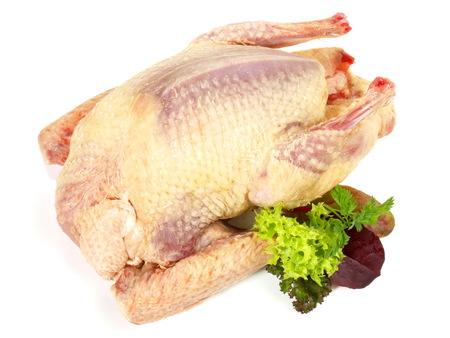 Raw Pigeon on white Background Stock Photo