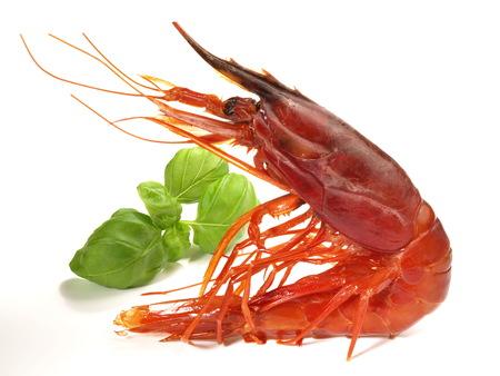 Prawn - carabinero shrimp on white background Stock Photo