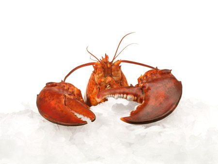 Crustacean - Lobster on crushed ice Stockfoto