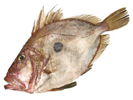 St. Pierre Fish raw on white Background