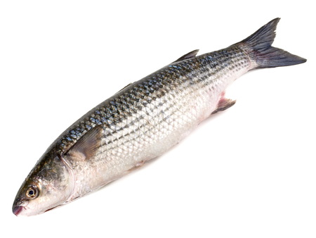 Flathead Grey Mullet - Fish on white Background