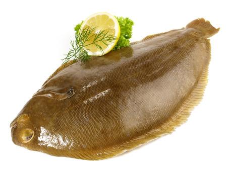 Sole - Flatfish on white Background