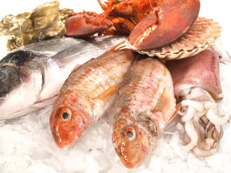 Seafood and Fish on white background