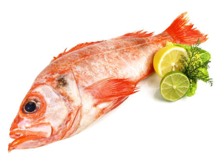 Red perch on white background Banque d'images