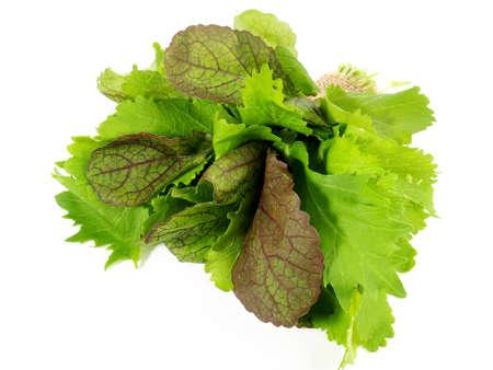 Fresh salad leaves isolated on white background