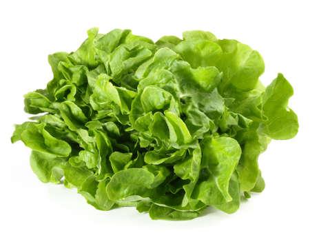 Green Oak Leaf Salad Isolated
