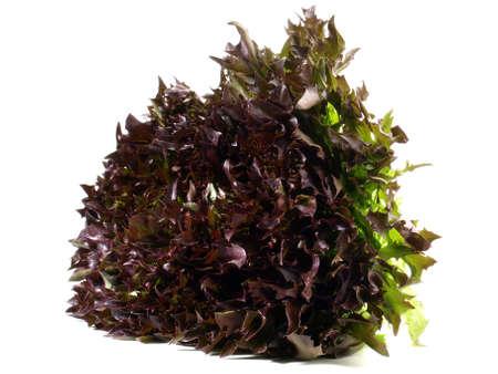 Purple Endive Salad Isolated