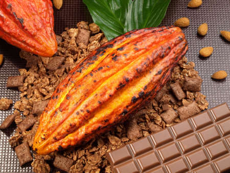 Fresh Cacao Fruit on brown background 版權商用圖片