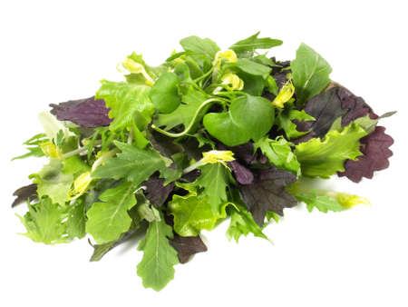 Fresh Mixed Salad Leaves Isolated