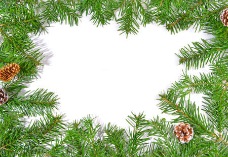 Christmas fir branches on white Standard-Bild
