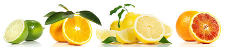 Various Citrus Fruits Panorama Isolated on white