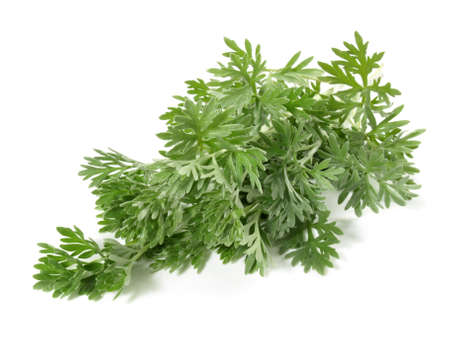 Wormwood Leaves isolated on white