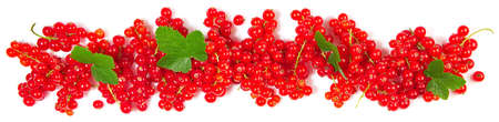 Red currants panorama with leaves isolated on white
