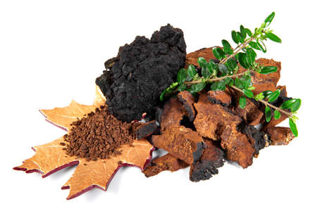 Chaga Mushroom with Mushroom Powder isolated - Natural Minerals