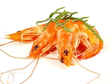 Small Shrimp - Shrimp isolated on white background 版權商用圖片