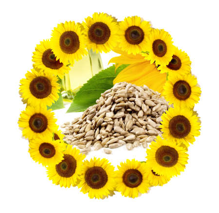 Sunflower Blossom Circle - Round Frame with Seeds and Oil isoalted on white background 版權商用圖片
