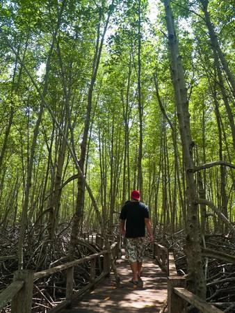 Mangrove forest, Pran Buri Forest Park, Prachuap Khiri Khan, Thailand Stock Photo