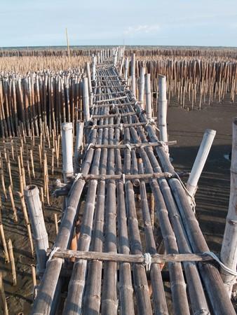 Bamboo bridge in mangrove educational center on the east coast of Maharchai bay, Maharchai , Samut Sakhon, Thailand