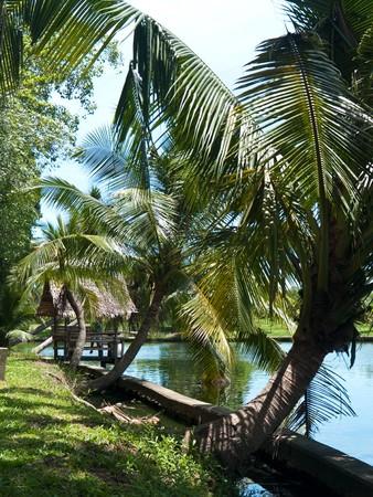 Coconut and small hut lake side in Buddhamonthon, Nakhon Pathom, Thailand photo