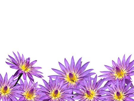 Lotus flower blossom isolate on white background Stock Photo - 8058600