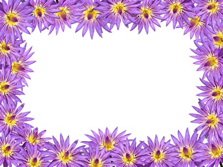 Lotus flower blossom isolate on white background Stock Photo - 8059097