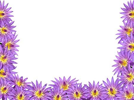 Lotus flower blossom isolate on white background Stock Photo - 8137932