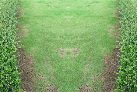 Bright and beautiful green grassland after mowing Stock Photo - 8293938