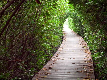 Boardwalk through pass tunnel of mangrove forest in Laem Phak Bia, Ban Laem, Phetchaburi, Thailand