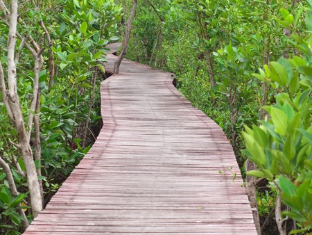 Boardwalk through the mangrove forest in Laem Phak Bia, Ban Laem, Phetchaburi, Thailand Stock Photo