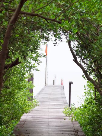 Exit of mangrove tunnel to the small pier photo