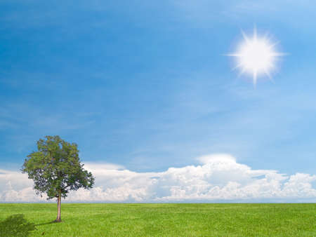 Beautiful cloud over field of green meadow with lonely tree in shining sunlight photo