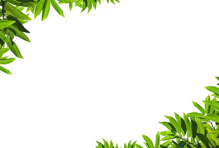 Natural green leaf frame on white background Stock Photo