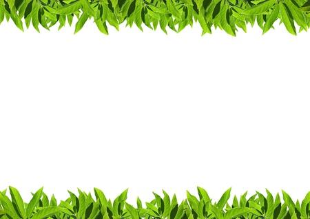Natural green leaf frame on white background Stock Photo