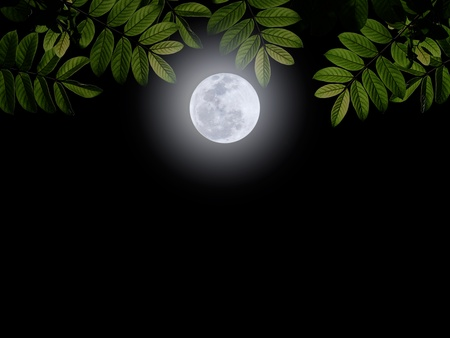 darkness: Full moon with green leaf on darkness sky Stock Photo
