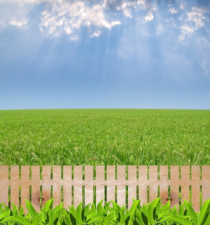 Agriculture garden with wooden fence, paddy field with produce grains and rays from heaven photo