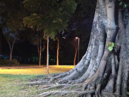 Roots branch above the ground in garden at night Stock Photo - 9729668
