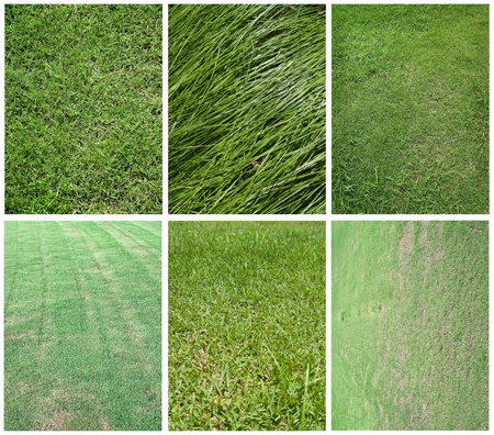 Various bright and beautiful green grassland texture Stock Photo - 9858474