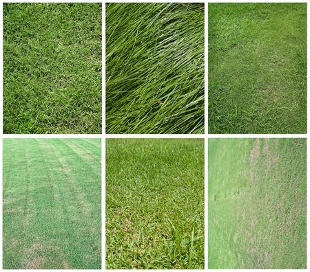 Various bright and beautiful green grassland texture Stock Photo - 9858474