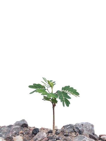 Wild young plant growing on ground Isolated on white Stock Photo - 11153492