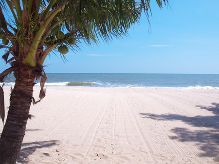 Playa tropical con palmeras de coco en Tailandia Foto de archivo - 11546795