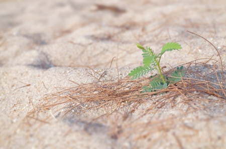 Lonely little young plant growing on sand photo