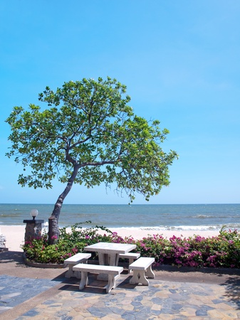 Recreational area in garden with Pong pong tree also known as Indian Suicide tree, Othalanga , Bougainvillea also known as Paper flower  and tropical beach photo