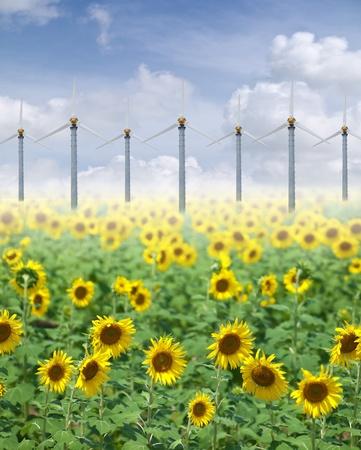 aero generator: Alternative energy with sunflowers and pure fresh air
