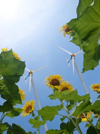 aero generator: Windmill with sunflowers and pure fresh air Stock Photo